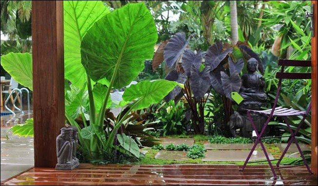 tropical outdoor plants